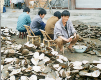 Freshwater Pearl farmers opening shells